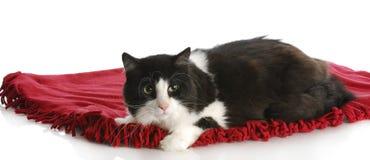 Gato que pone en la manta Imagen de archivo libre de regalías