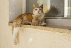Gato que pone en un travesaño de la ventana Fotografía de archivo