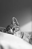 Gato que pone en una cama Imagenes de archivo