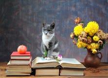 Gato que presenta al lado de las flores imagen de archivo