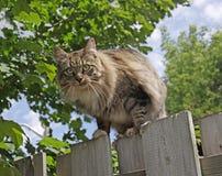 Gato que presenta en una cerca Imagen de archivo libre de regalías