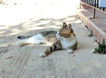 Gato que presenta para una imagen foto de archivo libre de regalías