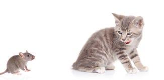 Gato que presta atenção a um rato