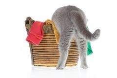 Gato que procura algo Foto de Stock Royalty Free