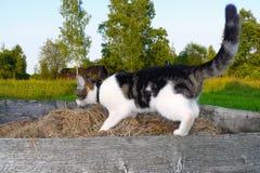 Gato que procura algo Imagens de Stock
