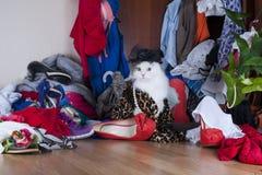 Gato que procura coisas na senhora do vestuário Fotografia de Stock