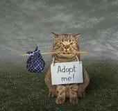 Gato que procura o proprietário 3 imagem de stock royalty free