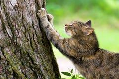 Gato que rasguña el poste Imagenes de archivo