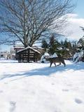 Gato que recorre sobre la nieve Fotografía de archivo libre de regalías