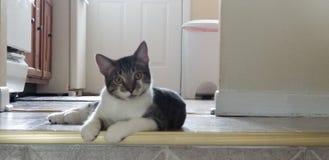 Gato que relaxa os olhos brilhantes preguiçosos bonitos imagem de stock