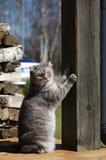 Gato que risca a coluna Imagens de Stock Royalty Free