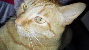 Gato que ronronea y que amasa una manta almacen de metraje de vídeo