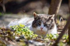 Gato que se acuesta en la tierra en parque Imágenes de archivo libres de regalías
