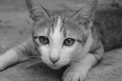 Gato que se agacha imagenes de archivo