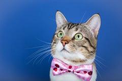 Gato que se incorpora y que mira imagen de archivo