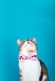 Gato que se incorpora y que mira foto de archivo
