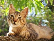 Gato que se reclina sobre la pared Fotografía de archivo libre de regalías