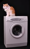 Gato que se reclina sobre una lavadora Imagen de archivo libre de regalías