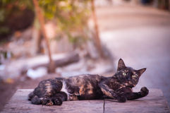 Gato que se relaja Fotos de archivo