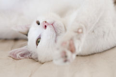 Gato que se relaja imagenes de archivo
