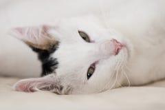 Gato que se relaja imagen de archivo libre de regalías