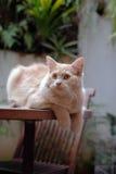 Gato que se relaja encima de la tabla Fotos de archivo