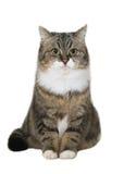 Gato que se sienta Fotografía de archivo libre de regalías