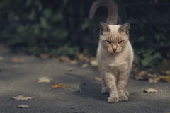 Gato que se sienta Foto de archivo