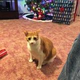 Gato que se sienta Foto de archivo libre de regalías