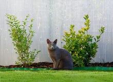 Gato que se sienta Fotos de archivo