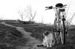 Gato que se sienta al lado de la bici Fotografía de archivo libre de regalías