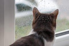 Gato que se sienta a casa y que mira a través de la ventana la lluvia del otoño Fotografía de archivo libre de regalías
