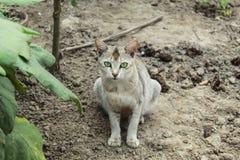 Gato que se sienta cerca de un jardín de la casa fotografía de archivo libre de regalías