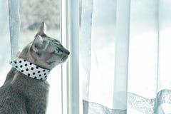 Gato que se sienta cerca de ventana Fotos de archivo libres de regalías