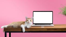 Gato que se sienta con el ordenador portátil en blanco en la tabla de madera Fotos de archivo