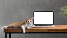 Gato que se sienta con el ordenador portátil en blanco en la tabla de madera Fotografía de archivo libre de regalías