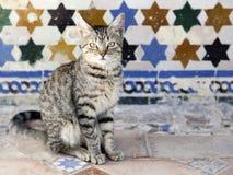 Gato que se sienta delante de una pared embaldosada vieja Foto de archivo libre de regalías