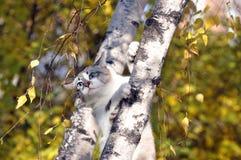 Gato que se sienta en el árbol del otoño Imagenes de archivo