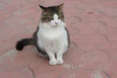 Gato que se sienta en el camino imágenes de archivo libres de regalías
