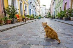 Gato que se sienta en el medio de Rue Cremieux en París Foto de archivo libre de regalías