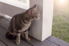 Gato que se sienta en el pórtico Fotografía de archivo