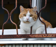 Gato que se sienta en el travesaño de la ventana Foto de archivo