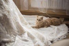 Gato que se sienta en el vestido de boda Imágenes de archivo libres de regalías