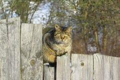 Gato que se sienta en fance Imagen de archivo libre de regalías