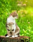 Gato que se sienta en hierba en tocón Fotos de archivo libres de regalías