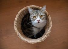 Gato que se sienta en la cesta fotografía de archivo