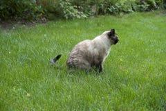 Gato que se sienta en la hierba Fotos de archivo libres de regalías