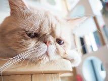 Gato que se sienta en la tabla Foto de archivo