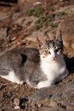 Gato que se sienta en la tierra, refrescándose abajo Imagen de archivo libre de regalías