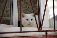 Gato que se sienta en la ventana detrás de barras Imagen de archivo libre de regalías